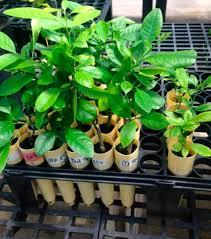 Plant Disease Journal - los alamos disease fighting technology showing promise