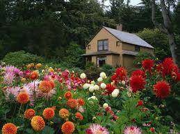 backyard awesome backyard flower garden captivating colourful