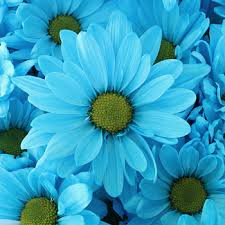 turquoise flowers fiftyflowers tinted blue flower s wedding