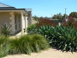 australian native garden plants australian native plants roy roberts landscapes