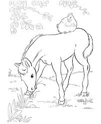horse coloring foal eating grass coloring book pictures