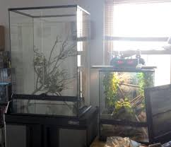 new exoterra terrarium for veiled cham chameleon forums