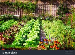 vegetable garden late summer herbs flowers stock photo 491150020