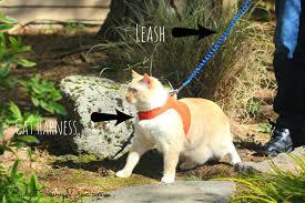 how to walk a cat on a leash beyondsummer budget savvy diva