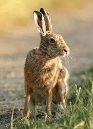 Emma Freud Rabbit Hutch 3101 Best Bunny Images On Pinterest Animals Bunnies And Bunny Art