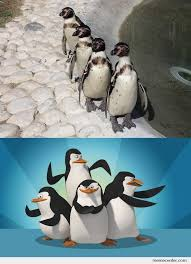 the penguins of madagascar by ben meme center