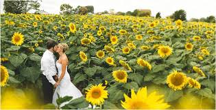 sunflower wedding sunflower weddings mon cheri bridals