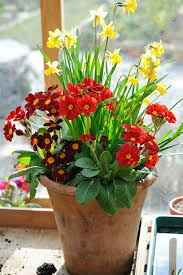 Plant Combination Ideas For Container Gardens - 15 best potted spring bulbs images on pinterest spring bulbs
