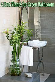 5 best plants for green bathroom quiet corner