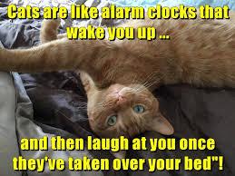 Alarm Meme - lolcats alarm clock lol at funny cat memes funny cat pictures