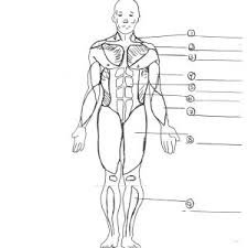 anatomy coloring pages to save image