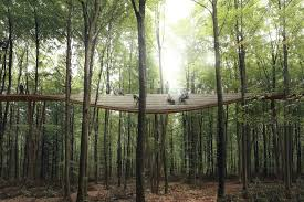 plans unveiled for a spiral treetop walkway in denmark