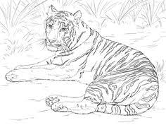 tiger coloring pages printable coloring coloring pages