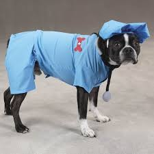 Halloween Costumes Dogs 33 Pet Dog Halloween Costumes Pet Holiday Costumes Images
