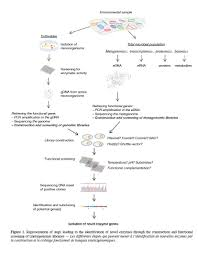the hunt for original microbial enzymes an initiatory review on