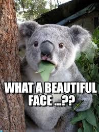 Surprised Meme Face - what a beautiful face surprised coala meme on memegen