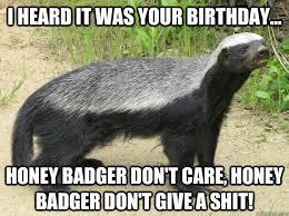 Honeybadger Meme - images honey badger birthday meme