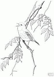 coloring pages for kids warbler birds blackburnian warbler