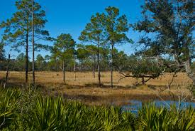 prairie oak ecosystems of the ocala national forest juniper prairie wilderness