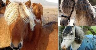 hairstyles for horses wikidee niche news