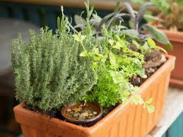 Potted Herb Garden Ideas Kitchen Indoor Herb Trough Planting A Herb Box Kitchen Window