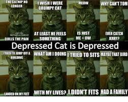 Depressed Cat Meme - the catnip no iwish i were grumpy cat meowwhy can t tom longer at