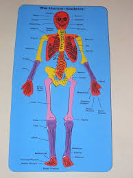 Apologia Human Anatomy And Physiology Apologia Anatomy And Physiology Science Natural Beach Living