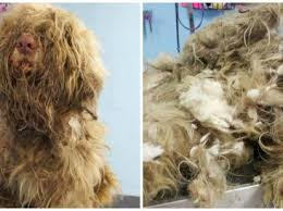 It Took a Dog Groomer 3 Hours and 4 Baths to Free This Pup From Mats