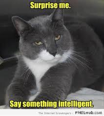 Sarcastic Cat Meme - 36 funny sarcastic cat meme pmslweb