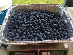 Little Berry Little Berry Farm Llc Home Facebook