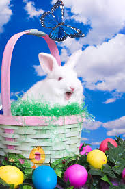 talking easter eggs talking easter bunny stock image image of eggs bunny 4516325