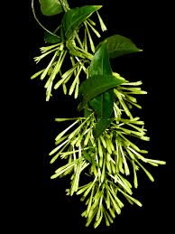 Highly Fragrant Plants Fragrant Gardens State By State Gardening Web Articles