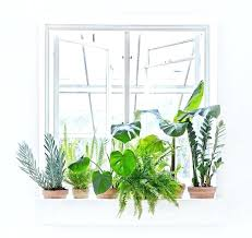 plante d駱olluante chambre plantes depolluantes chambre 10 plantes que vous devriez avoir
