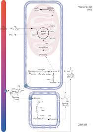 brain tissue biochemistry