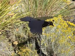 chipper u0027 bobwhite quail birdly art