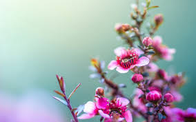 hd flower wallpaper qige87 com
