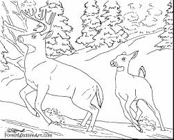 extraordinary realistic animal coloring pages with coloring pages