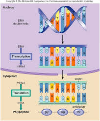 277 best biology dna rna u0026 protein synthesis images on