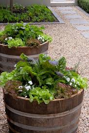 Half Barrel Planter by Best 25 Wine Barrel Garden Ideas On Pinterest Wine Barrel