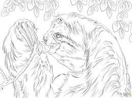three toed sloth eating leaves coloring page free printable