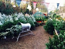 christmas tree delivery christmas tree delivery nationwide christmas tree delivery real