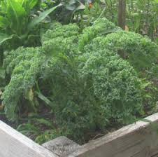 Weather Zones For Gardening - when to plant fall vegetables in nj zone 6 nj gardening tips