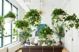 plant for office 5 creative design solutions to fix the open office