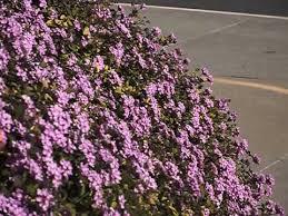 flowers san diego hummingbird up feeding on pink flowers san diego ca 2014