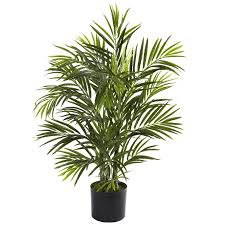 best plants to keep in your office for a fresh workspace kami blog