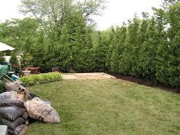 Backyard Privacy Trees Pryor U0027s Nursery Baltimore Evergreen Trees