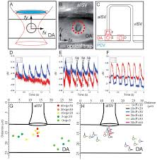 pulse propagation by a capacitive mechanism drives embryonic blood