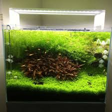 overgrown by henning oo fish freshwater and aquarium