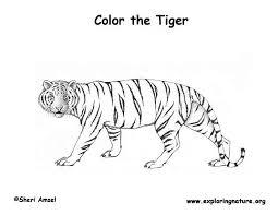 nos jeux de coloriage tigre à imprimer gratuit