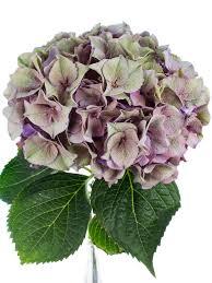 blumen fã r hochzeit hortensien sorgen für eine üppige blütenpracht in ihrer vase die